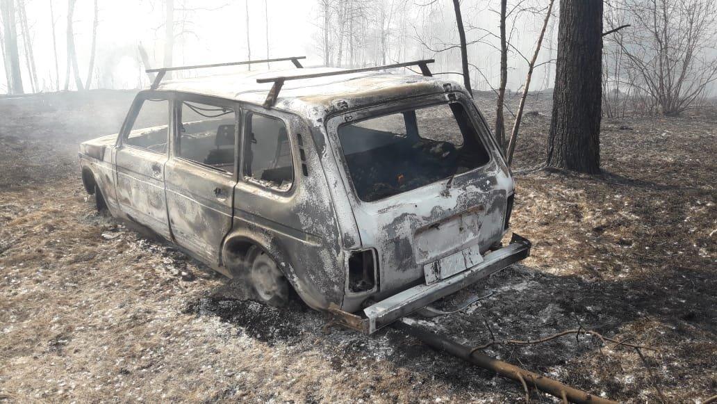 Фото Уже сгорели 15 дач и сотни гектаров леса: окрестности Новосибирска охвачены огнём 5