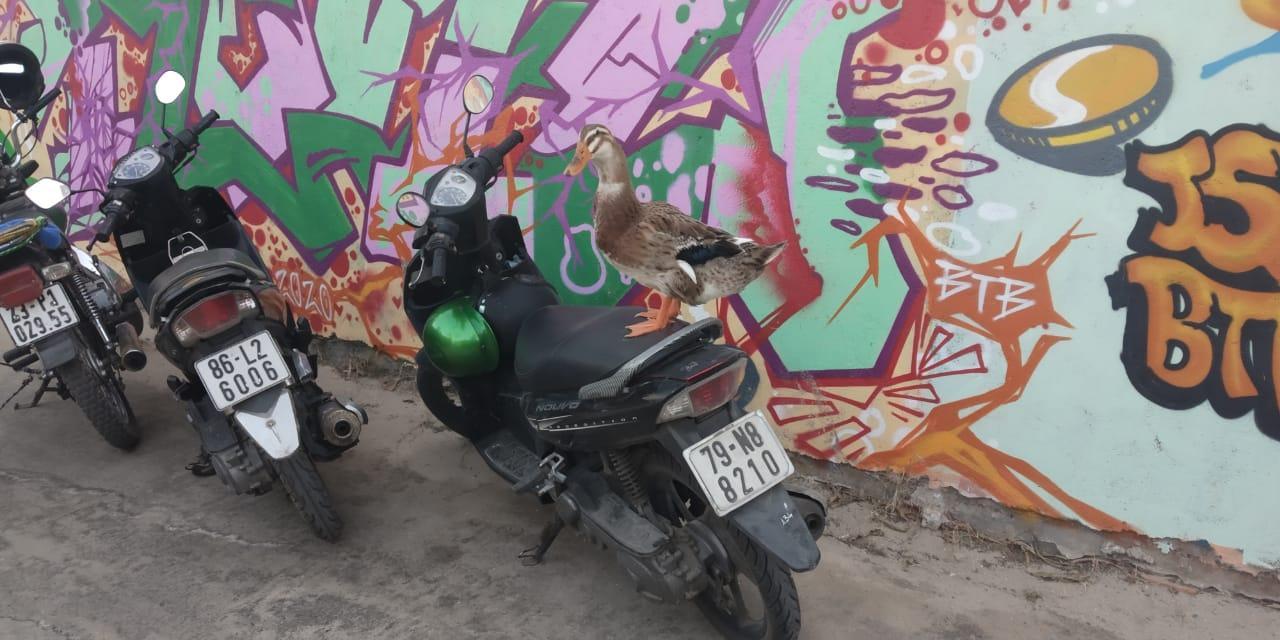 фото «Боюсь, что её убьют»: санитарные службы Новосибирска отобрали у прилетевшей из Вьетнама пары звезду «Инстаграма» утку Бориславу 5