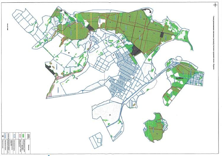 Фото 2 тысячи деревьев ежегодно вырубают в Бердске: власти рассказали, зачем 2