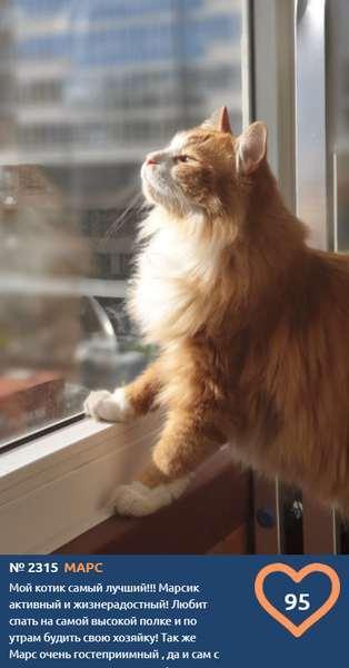 фото «Из окна видна даль»: участники конкурса «Главный котик Новосибирска» ждут весну 5