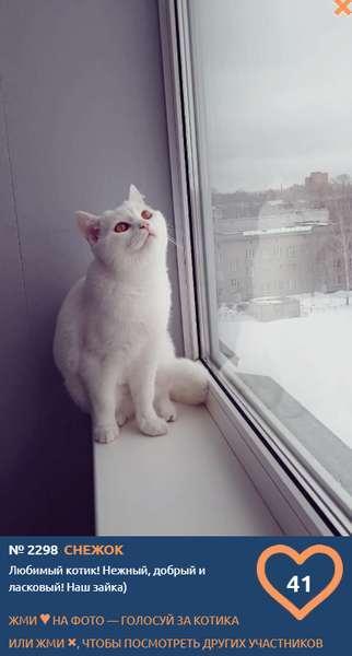 фото «Из окна видна даль»: участники конкурса «Главный котик Новосибирска» ждут весну 3