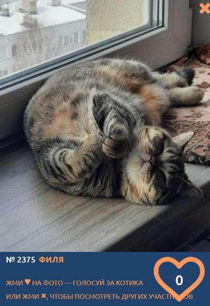 фото «Из окна видна даль»: участники конкурса «Главный котик Новосибирска» ждут весну 2