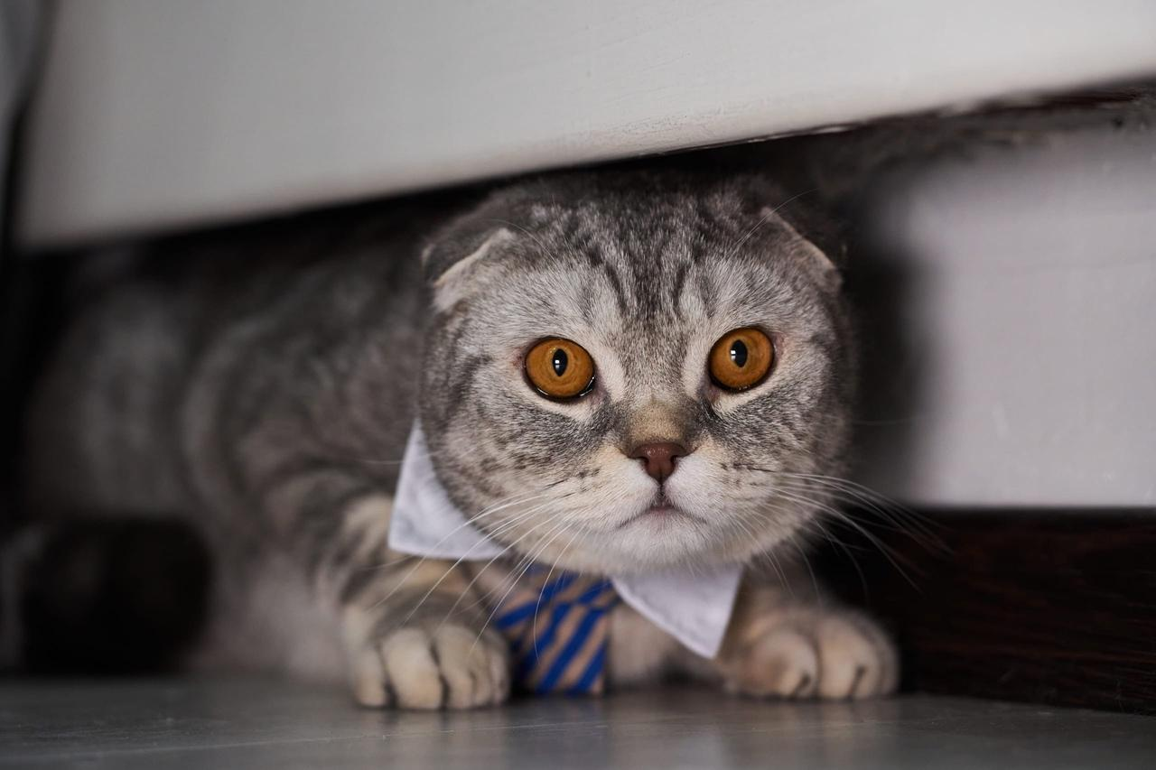 фото Пять правил идеальной фотосессии: как создать крутой снимок и победить в конкурсе «Главный котик Новосибирска-2021» 3