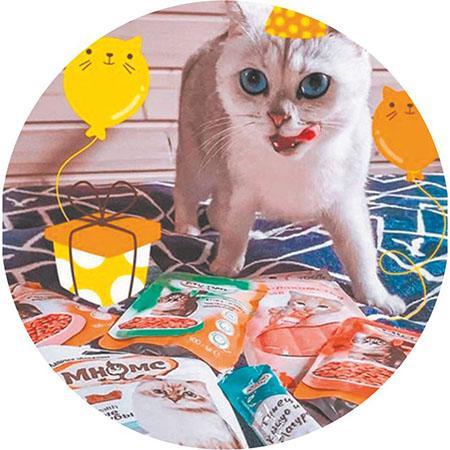 фото Приручить, побаловать, сделать счастливой: 5 мифов о правилах питания и секреты лакомств для кошек 5
