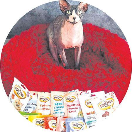 фото Приручить, побаловать, сделать счастливой: 5 мифов о правилах питания и секреты лакомств для кошек 4