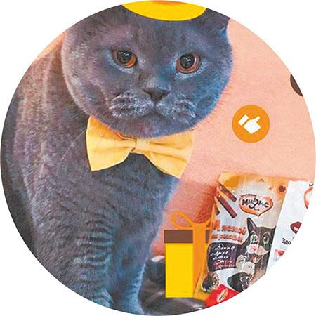 фото Приручить, побаловать, сделать счастливой: 5 мифов о правилах питания и секреты лакомств для кошек 3