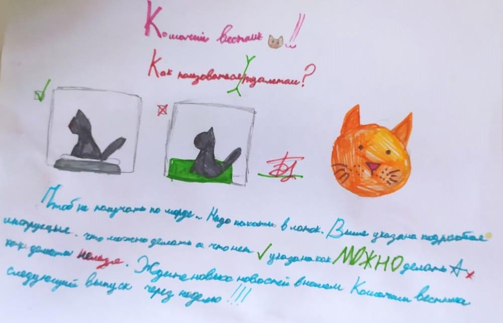 Фото «Чешите меня полностью»: как пятая «Главная кошка Новосибирска» занимается научной деятельностью и читает газеты 4