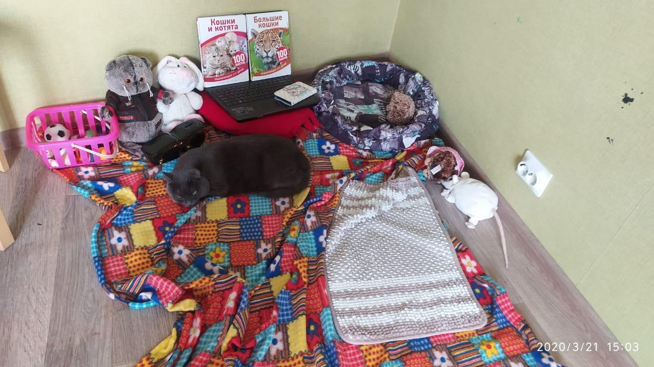 Фото «Чешите меня полностью»: как пятая «Главная кошка Новосибирска» занимается научной деятельностью и читает газеты 3