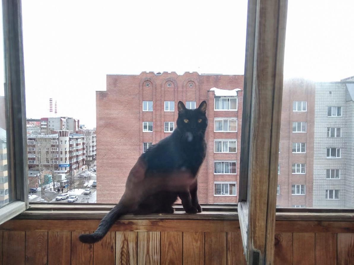 Фото «Полицейский» Тоша регулирует движение, запрещает игры с телефоном и жаждет стать «Главным котиком Томска-2021» 7