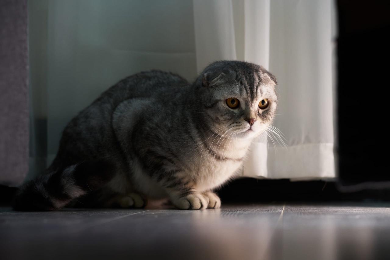 фото Ключевые правила фотосессии с кошкой: как создать идеальный снимок и победить в конкурсе «Главный котик Омска-2021» 4