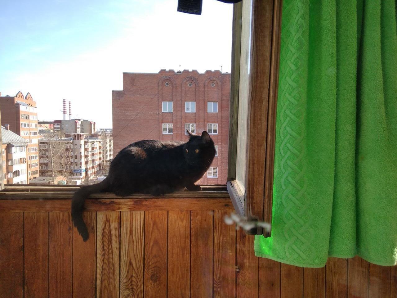 Фото «Полицейский» Тоша регулирует движение, запрещает игры с телефоном и жаждет стать «Главным котиком Томска-2021» 8
