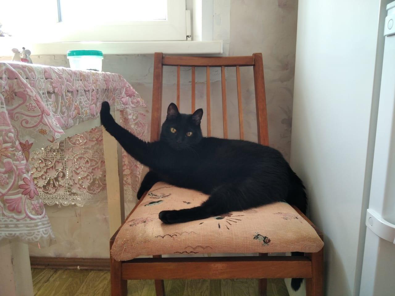 Фото «Полицейский» Тоша регулирует движение, запрещает игры с телефоном и жаждет стать «Главным котиком Томска-2021» 6