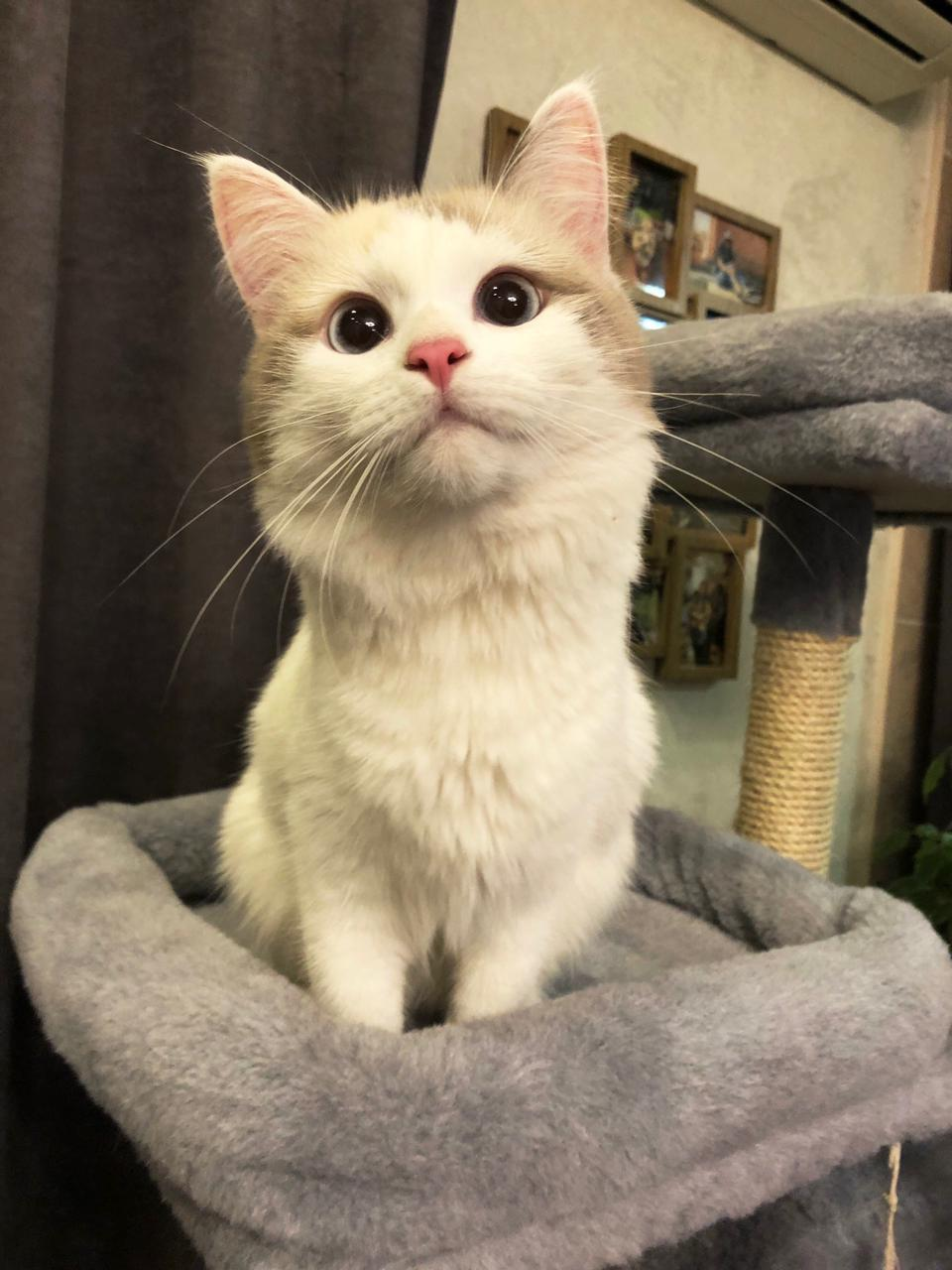 фото Выброшенная на улицу четырёхмесячным котёнком Ами стала седьмой «Главной кошечкой Омска» 3