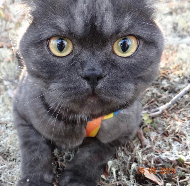 фото «Главный котик Омска-2021»: как благородный кот с греческим именем Максимиан помог хозяйке сдать важный экзамен и не провалить сессию 6