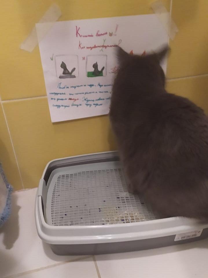 Фото «Чешите меня полностью»: как пятая «Главная кошка Новосибирска» занимается научной деятельностью и читает газеты 5