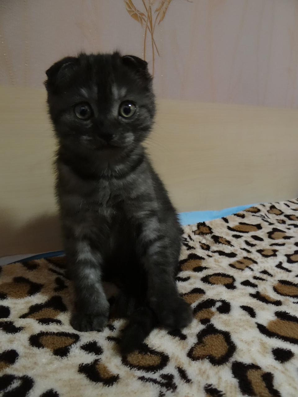 фото «Главный котик Омска-2021»: как благородный кот с греческим именем Максимиан помог хозяйке сдать важный экзамен и не провалить сессию 3