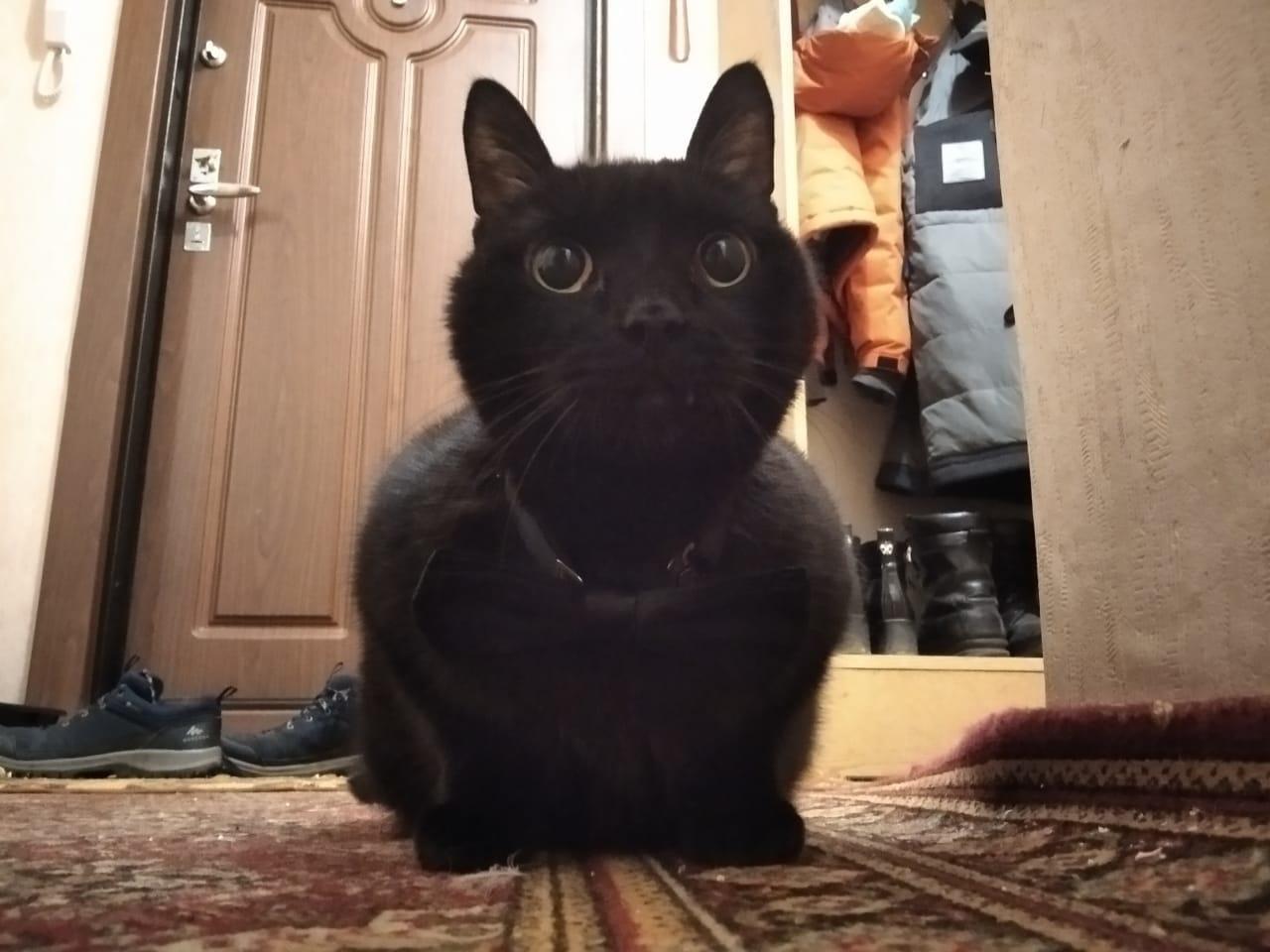 Фото «Полицейский» Тоша регулирует движение, запрещает игры с телефоном и жаждет стать «Главным котиком Томска-2021» 12