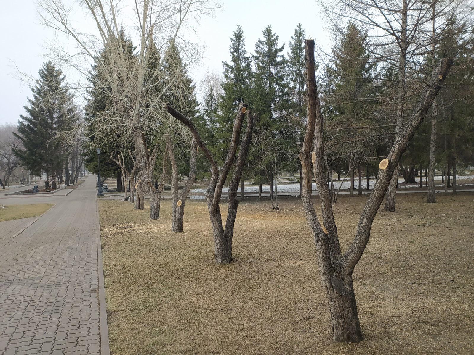фото В Первомайском сквере Новосибирска обрезали деревья – как в фильме ужасов 2