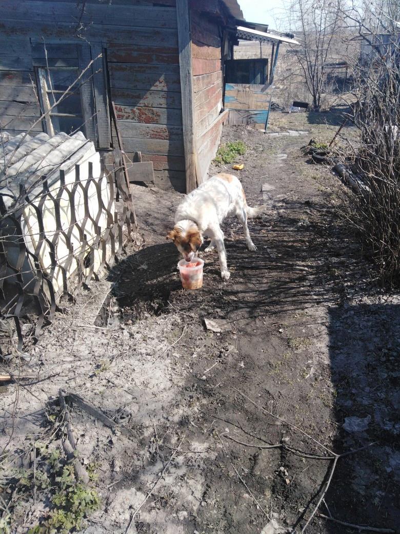 фото Житель пригорода Новосибирска оставил собаку на верную смерть в заброшенном доме 2