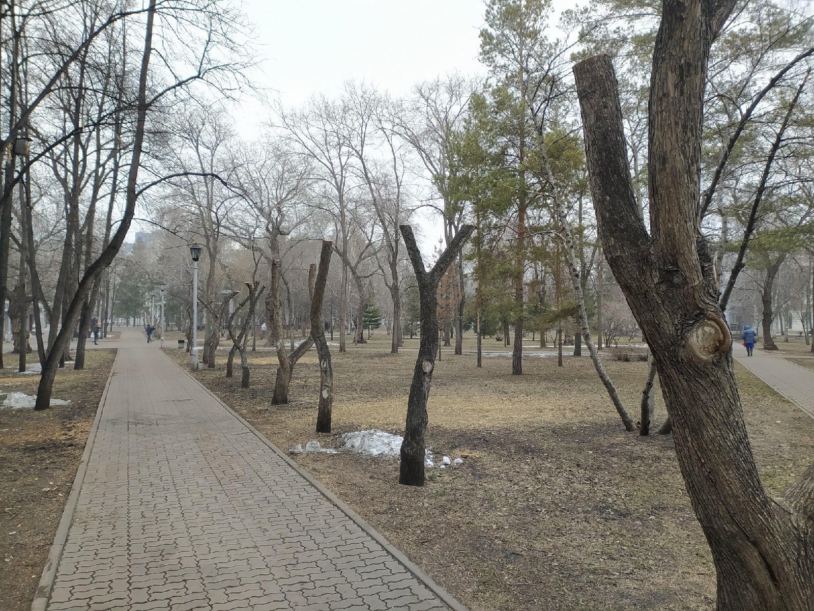 фото В Первомайском сквере Новосибирска обрезали деревья – как в фильме ужасов 4