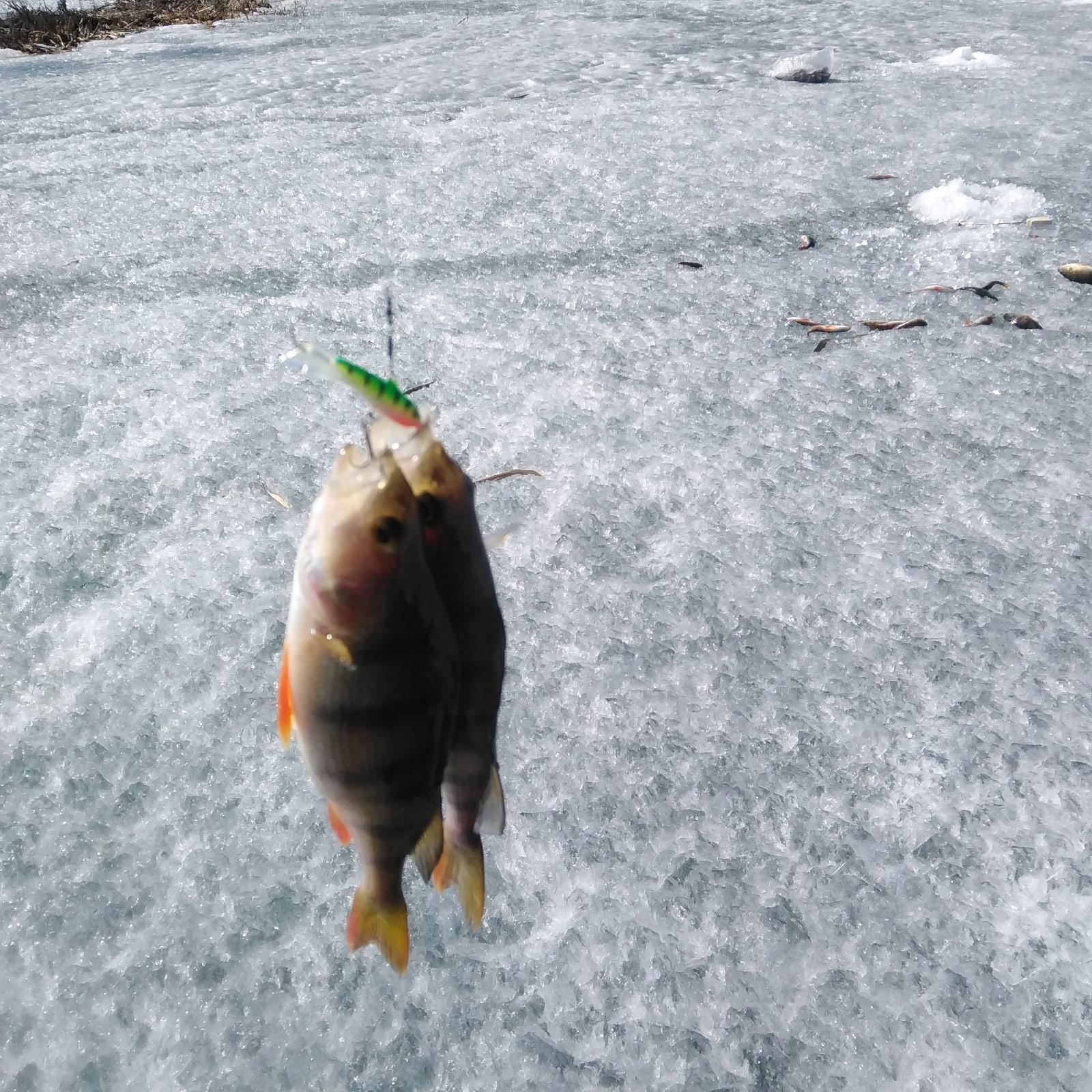 фото Сибирские рыбаки закрыли сезон зимней рыбалки 4