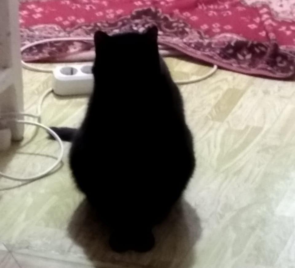 Фото «Полицейский» Тоша регулирует движение, запрещает игры с телефоном и жаждет стать «Главным котиком Томска-2021» 11