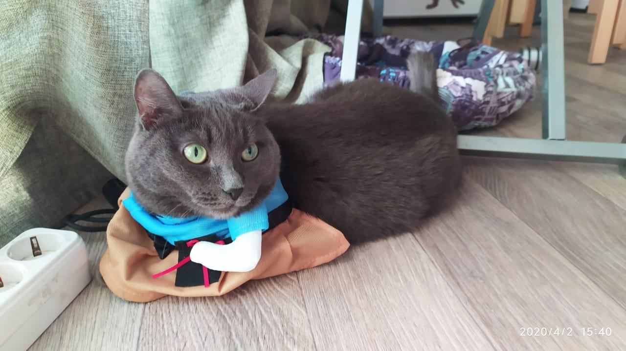Фото «Чешите меня полностью»: как пятая «Главная кошка Новосибирска» занимается научной деятельностью и читает газеты 8