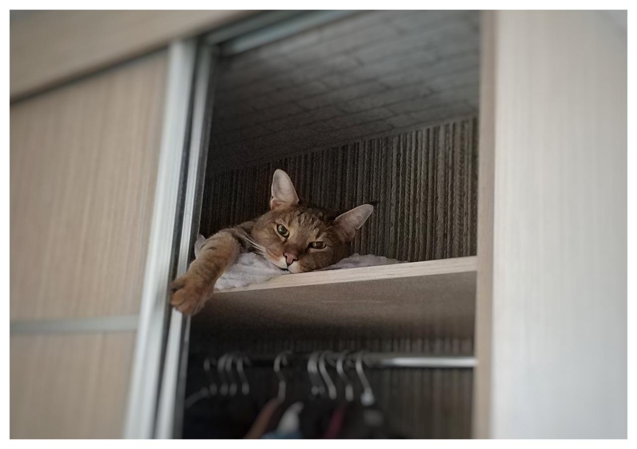 фото «Я думала, вытяжка на плиту рухнет»: как седьмой «Главный котик Новосибирска» породы чаузи чуть не разрушил квартиру хозяйки и перевернул всю её жизнь 3