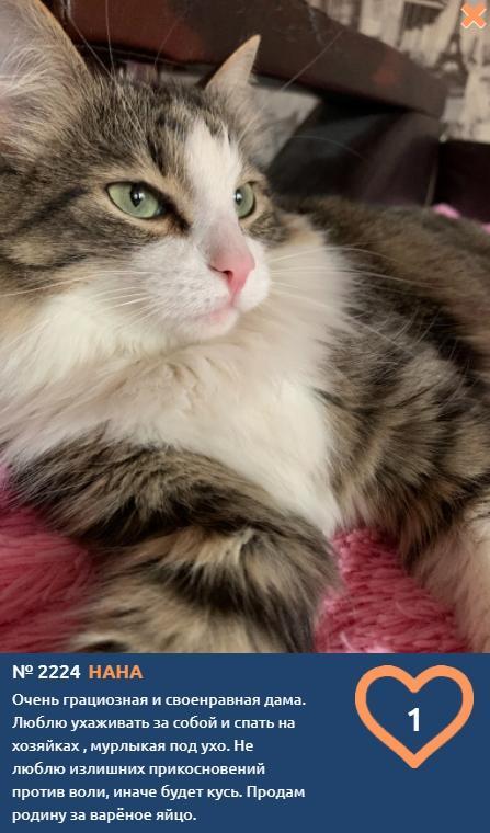 фото Влияние окраса кошки на её характер: выводы учёных и умилительные фото участников конкурса «Главный котик Томска» 3