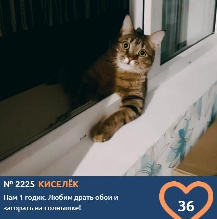 фото Влияние окраса кошки на её характер: выводы учёных и умилительные фото участников конкурса «Главный котик Томска» 2