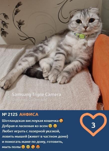 фото Влияние окраса кошки на её характер: выводы учёных и умилительные фото участников конкурса «Главный котик Томска» 10