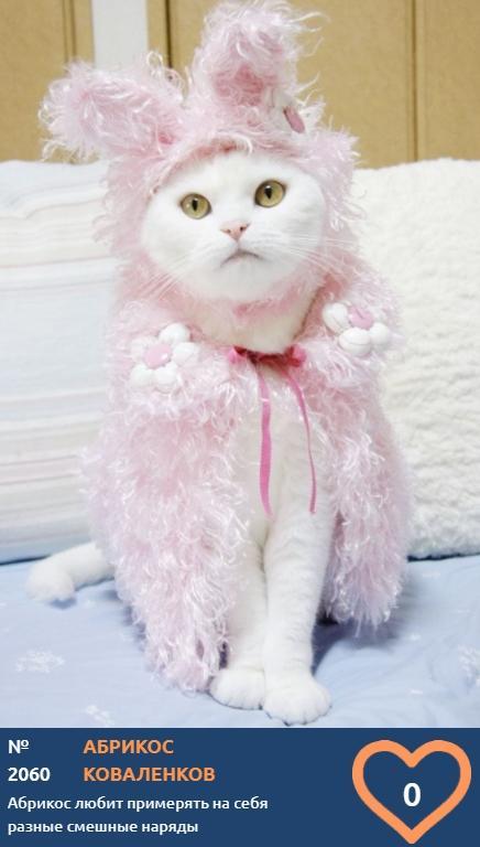 фото Влияние окраса кошки на её характер: выводы учёных и умилительные фото участников конкурса «Главный котик Томска» 7