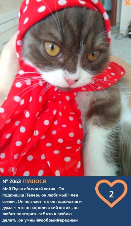 фото Влияние окраса кошки на её характер: выводы учёных и умилительные фото участников конкурса «Главный котик Томска» 4