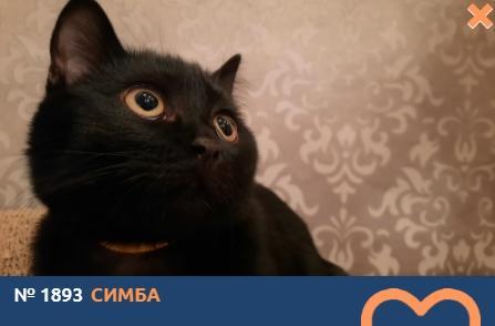 фото Влияние окраса кошки на её характер: выводы учёных и умилительные фото участников конкурса «Главный котик Томска» 9