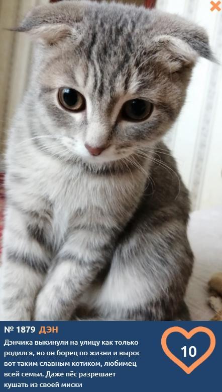 фото Влияние окраса кошки на её характер: выводы учёных и умилительные фото участников конкурса «Главный котик Томска» 6