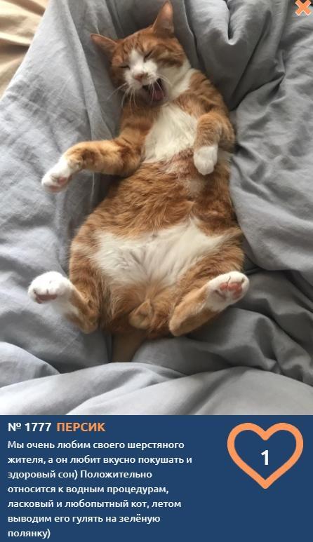 фото Влияние окраса кошки на её характер: выводы учёных и умилительные фото участников конкурса «Главный котик Томска» 11