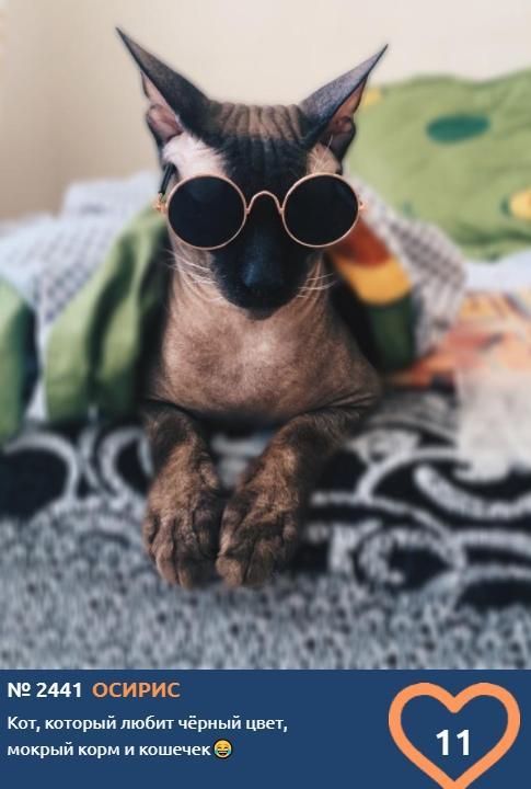 фото Лысые участники конкурса «Главный котик Новосибирска»: зачем сибиряки заводят экзотических сфинксов 4