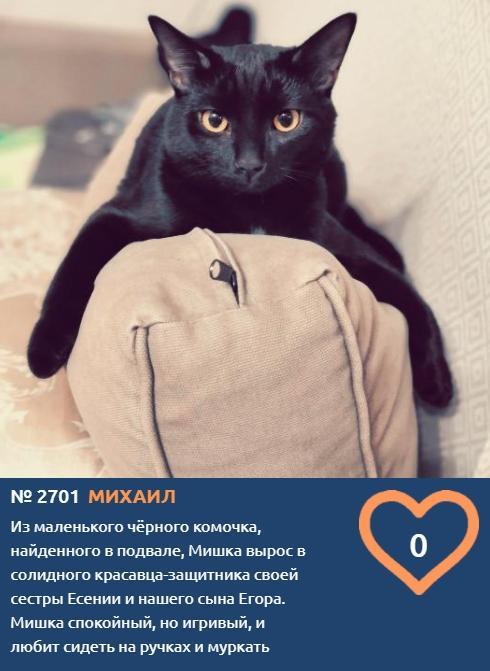 фото «Главный котик Новосибирска-2021»: цвет кошки способен привлечь в дом удачу и деньги 4