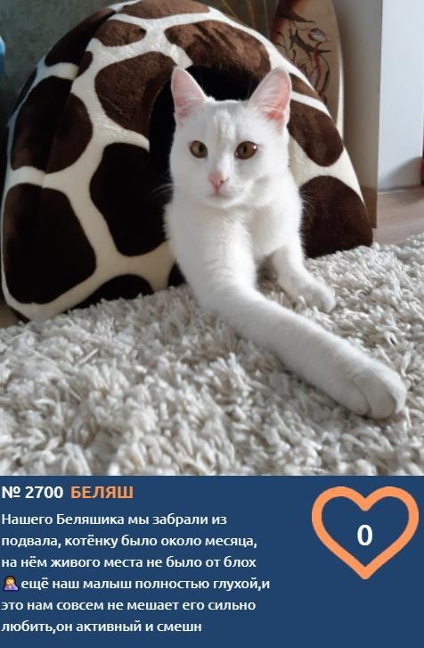 фото «Главный котик Новосибирска-2021»: цвет кошки способен привлечь в дом удачу и деньги 5