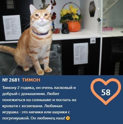 фото «Главный котик Новосибирска-2021»: цвет кошки способен привлечь в дом удачу и деньги 7
