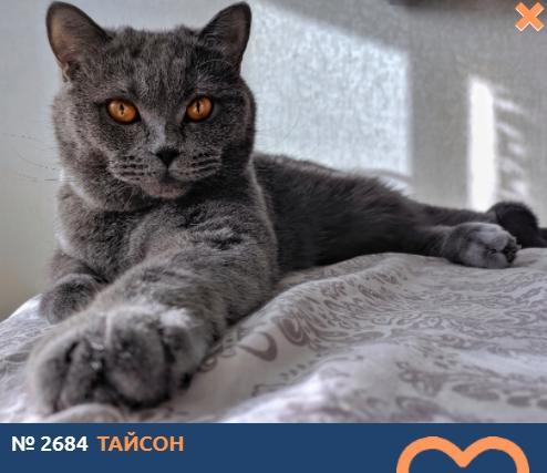 фото «Главный котик Новосибирска-2021»: цвет кошки способен привлечь в дом удачу и деньги 2