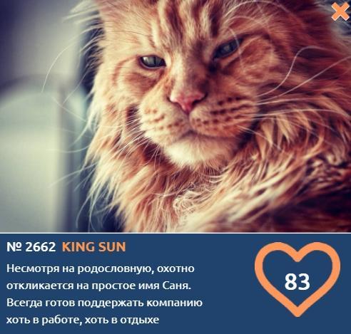 фото «Главный котик Новосибирска-2021»: цвет кошки способен привлечь в дом удачу и деньги 8