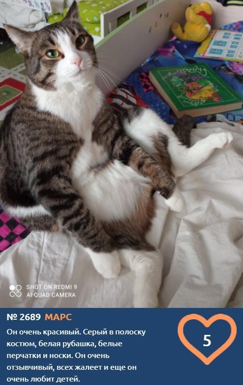 фото «Главный котик Новосибирска-2021»: цвет кошки способен привлечь в дом удачу и деньги 9