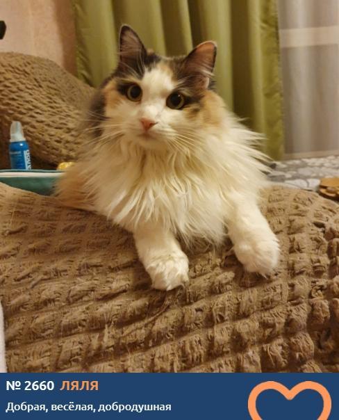 фото «Главный котик Новосибирска-2021»: цвет кошки способен привлечь в дом удачу и деньги 10