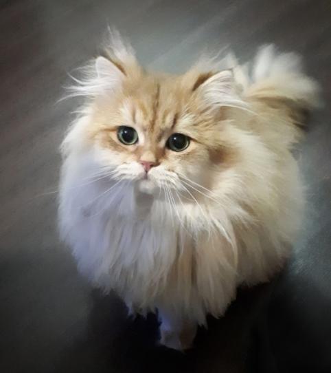 фото Пять правил идеальной фотосессии: как создать крутой снимок и победить в конкурсе «Главный котик Новосибирска-2021» 4