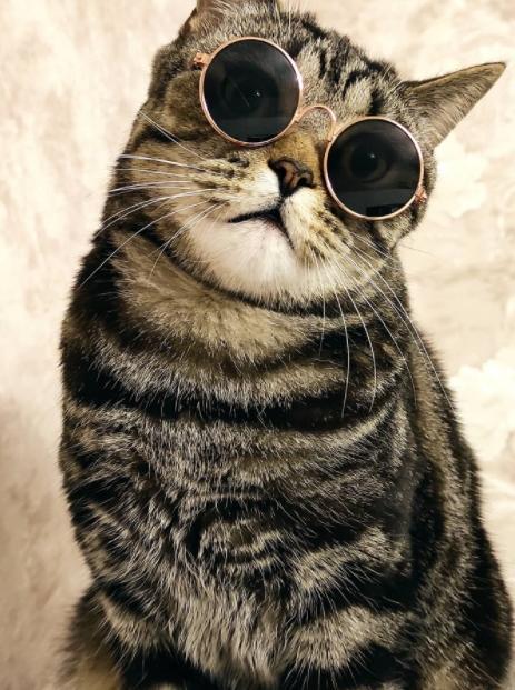 фото Ключевые правила фотосессии с кошкой: как создать идеальный снимок и победить в конкурсе «Главный котик Омска-2021» 2