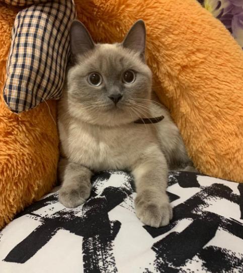 фото Ключевые правила фотосессии с кошкой: как создать идеальный снимок и победить в конкурсе «Главный котик Омска-2021» 3