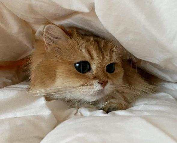 фото Знаменитая на весь интернет Smoothie the Cat из Нидерландов захотела стать «Главной кошечкой Новосибирска-2021» 2