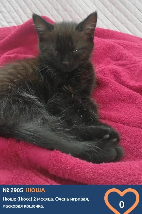 Фото «Главный котик Новосибирска-2021»: почему чёрные кошки приносят своим хозяевам счастье 6
