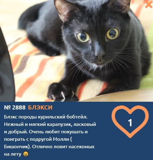 Фото «Главный котик Новосибирска-2021»: почему чёрные кошки приносят своим хозяевам счастье 3